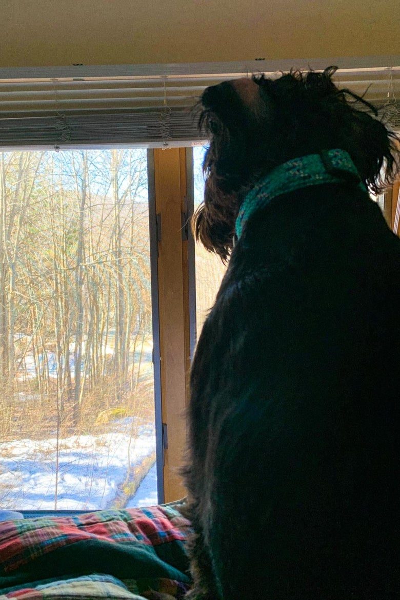 A dog looking out the window at a forest.