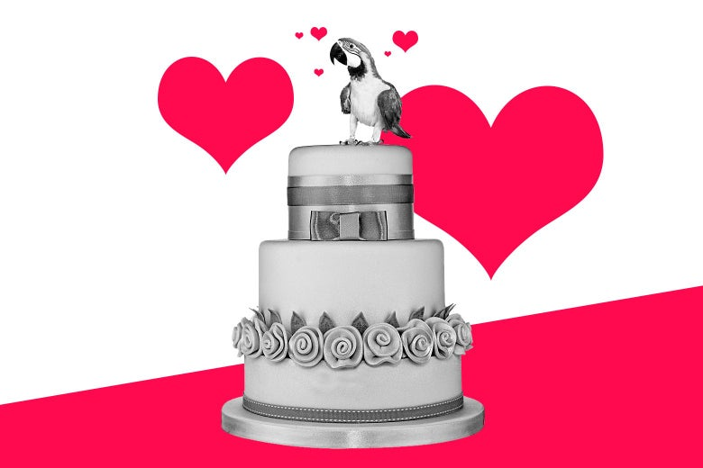 Parrot on a wedding cake