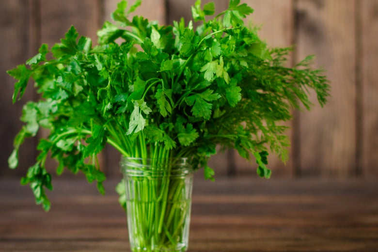 A bunch of parsley in a jar.