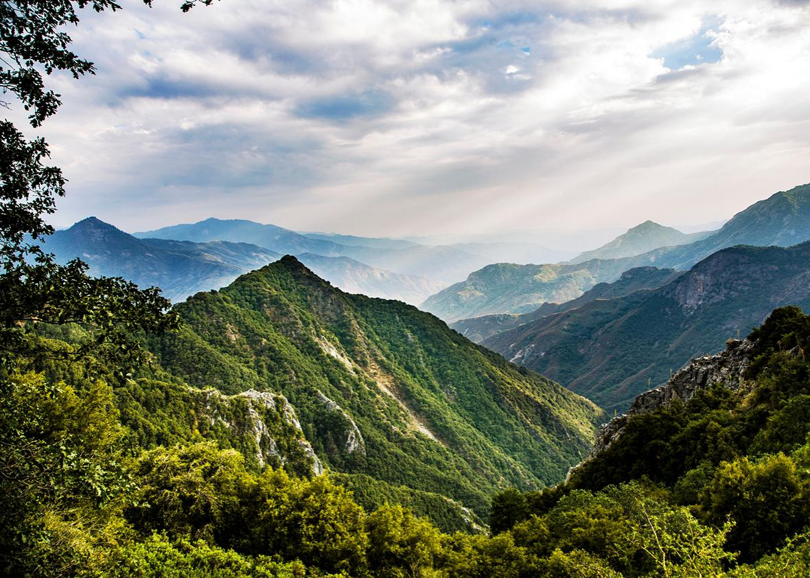 View to forest of Sequoia National Park.