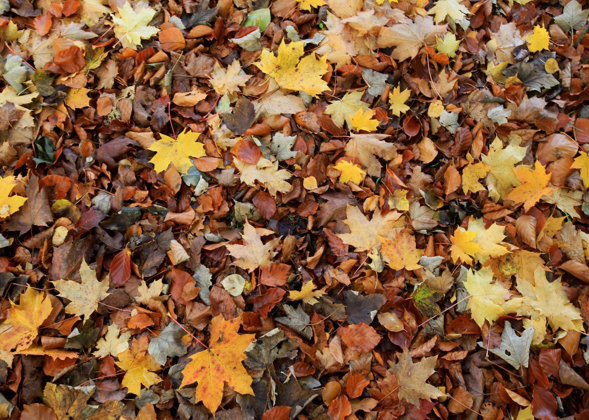 A New England Company Will Ship Fall Leaves For 20