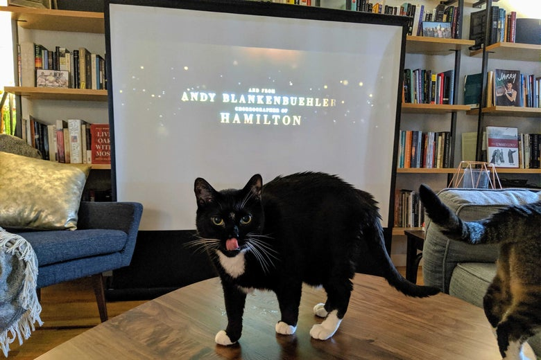 A cat on a table sticks its tongue out, the Cats trailer projected in the background.