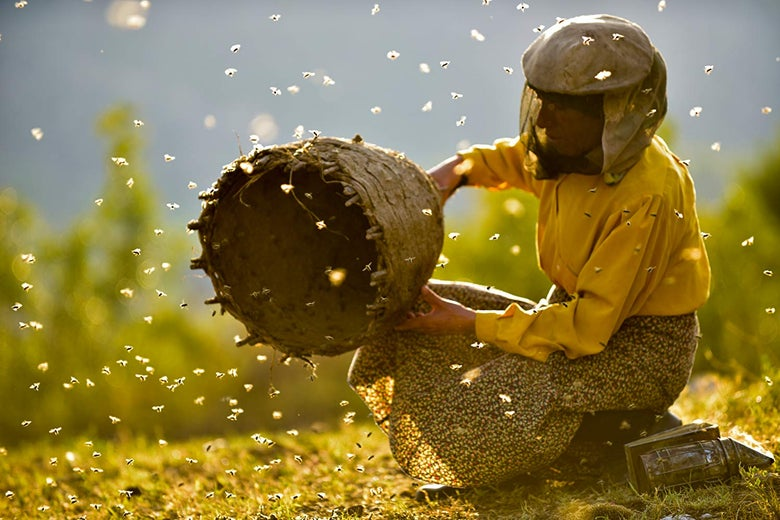 A woman dressed in yellow with a beekeeper's mask holds a halved beehive. A swarm of bees surrounding her.