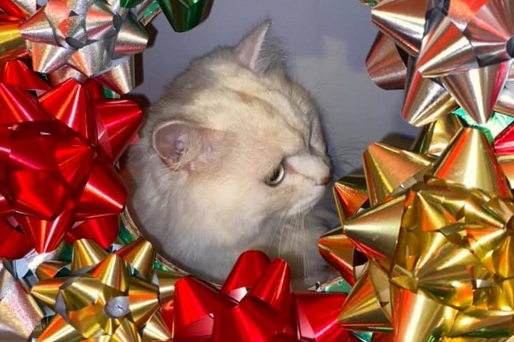 A cat surrounded by a wreath of bows.