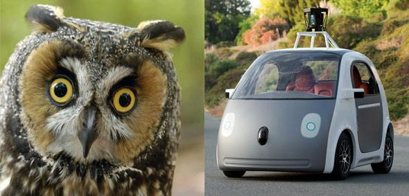 Photo of an owl by Ingram Publishing