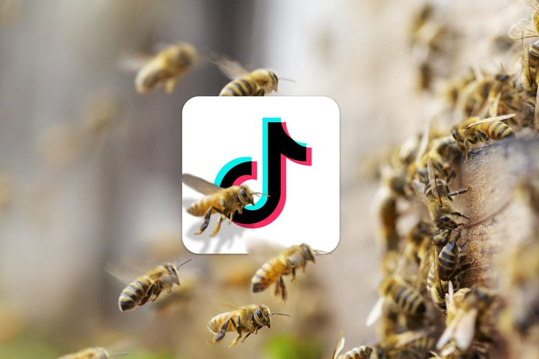 Bees swarm around the TikTok logo.