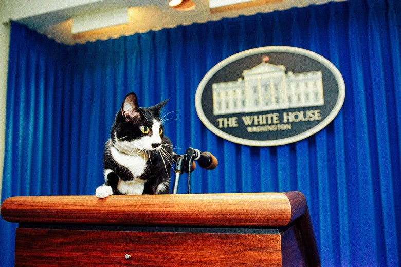 Socks, a black-and-white cat, sits atop the podium in the White House press briefing room.