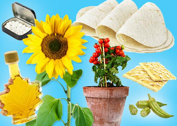 Maple syrup, mints, a sunflower, tomatoes, tortillas, Pop-Tarts, okra