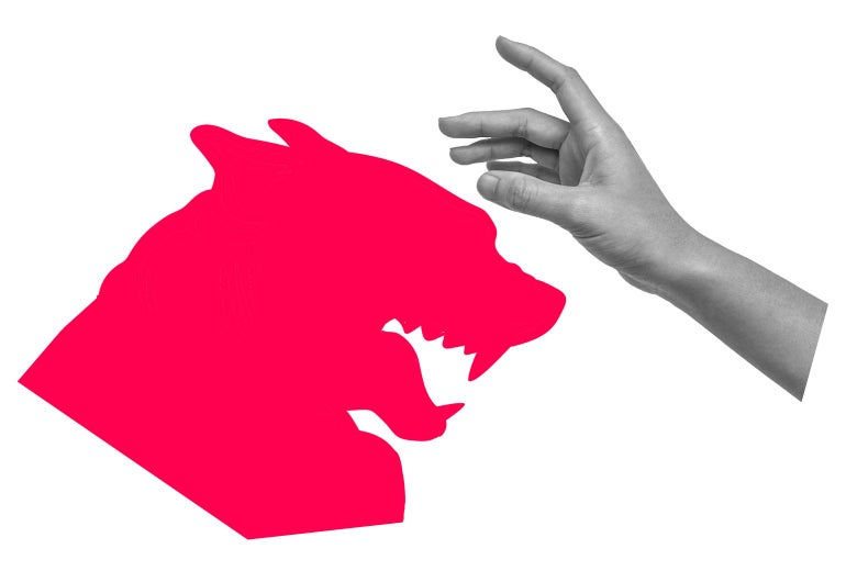 Graphic of a growling dog, and a hand reaching toward it as if to pet.