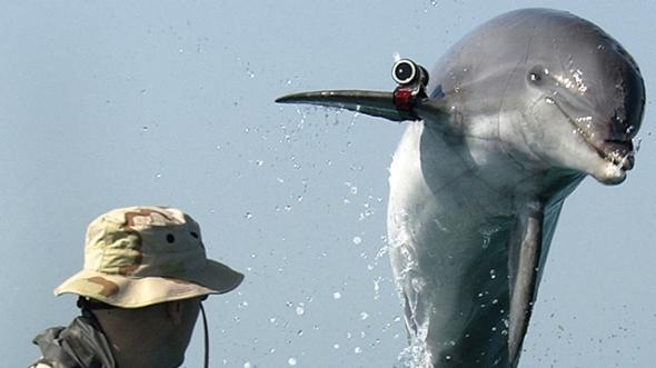 1869812JH001_dolphins