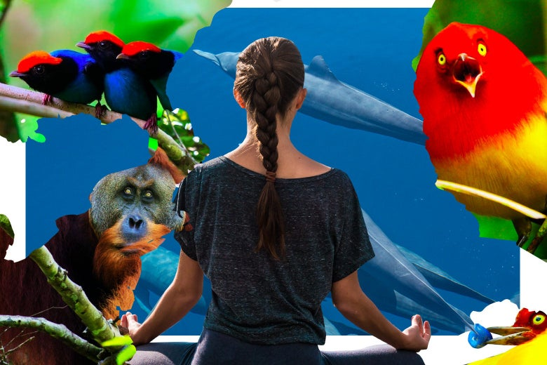 A woman meditates in front of what looks like an ape, some birds of paradise, and some dolphins deep underwater