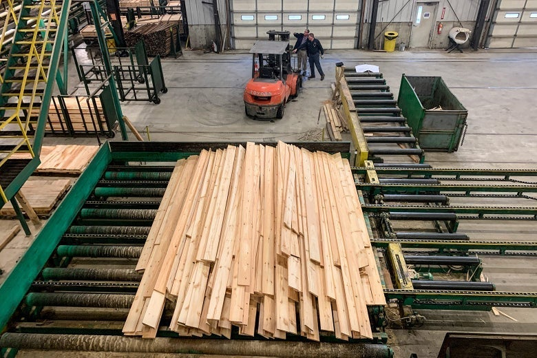 White pine boards come off the line at Robbins Lumber in Searsmont, Maine.