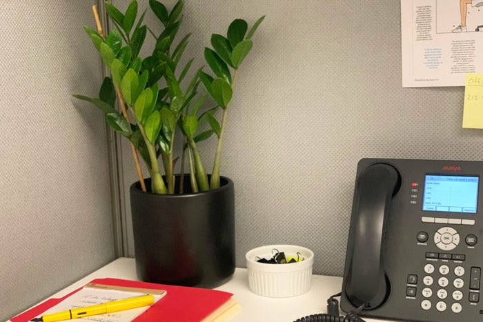 A ZZ plant in a cubicle.