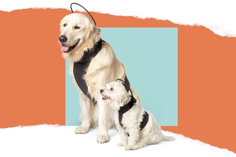 Who Would Buy This Thing: Dog Anxiety-Soother