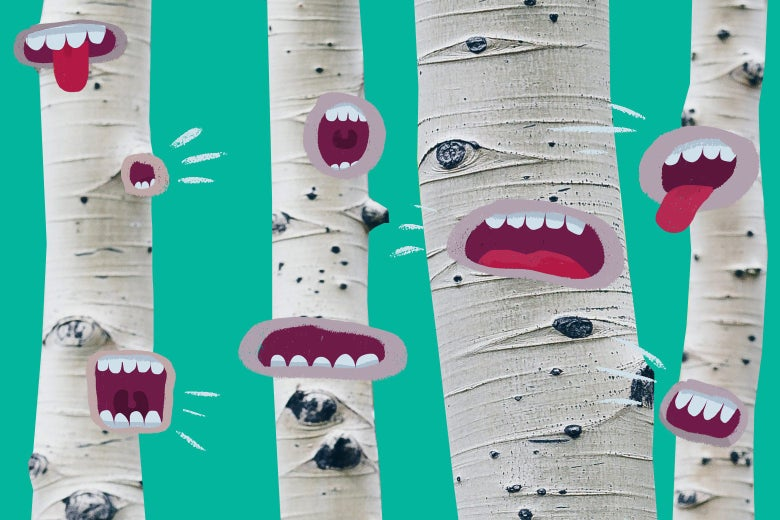 Photo illustration of trees with mouths that are speaking.