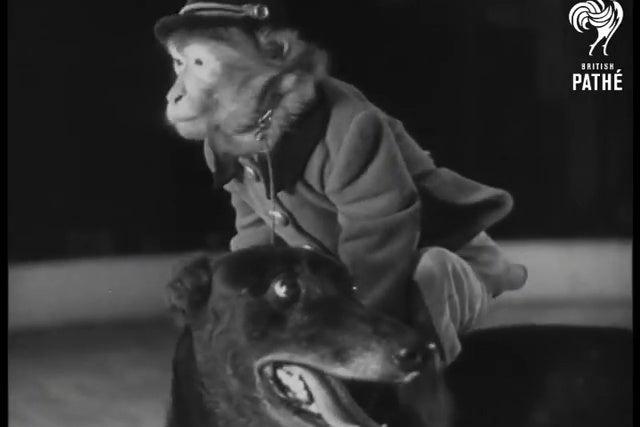 A monkey riding a greyhound.