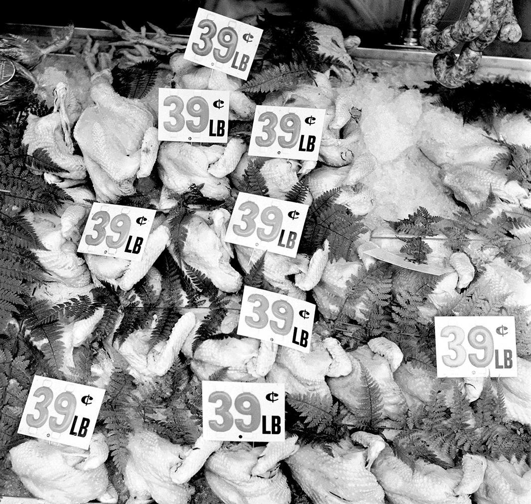 Chicken, 39 – 1947,Chicken, 39 – 1947