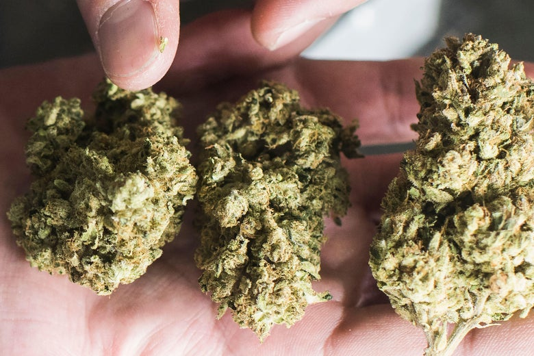 A budtender displays cannabis at the Higher Path medical marijuana dispensary in the San Fernando Valley area of Los Angeles.