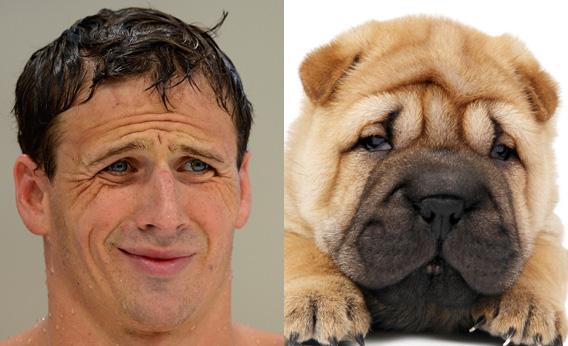 Lochte and Shar-Pei