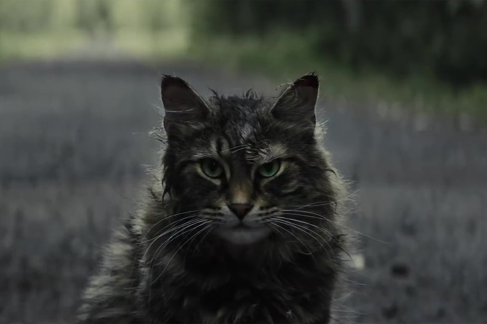 A disheveled-looking cat.