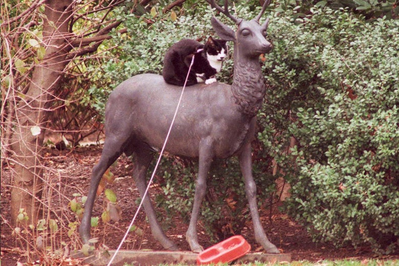 President Bill Clinton had a cat named Socks, seen here on top of a deer in the White House garden on Dec. 25, 1994.