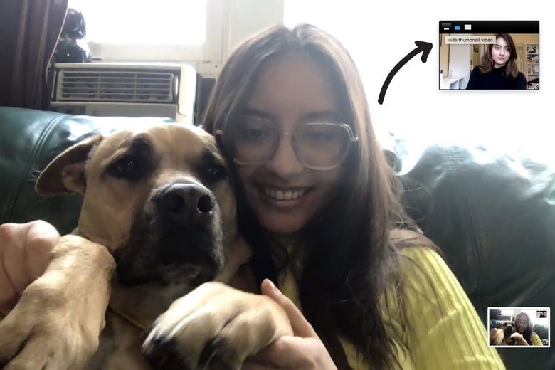 "A woman holds up a dog on Zoom. An arrow points to the image of another user in the top right, with the option to ""Hide thumbnail video."""