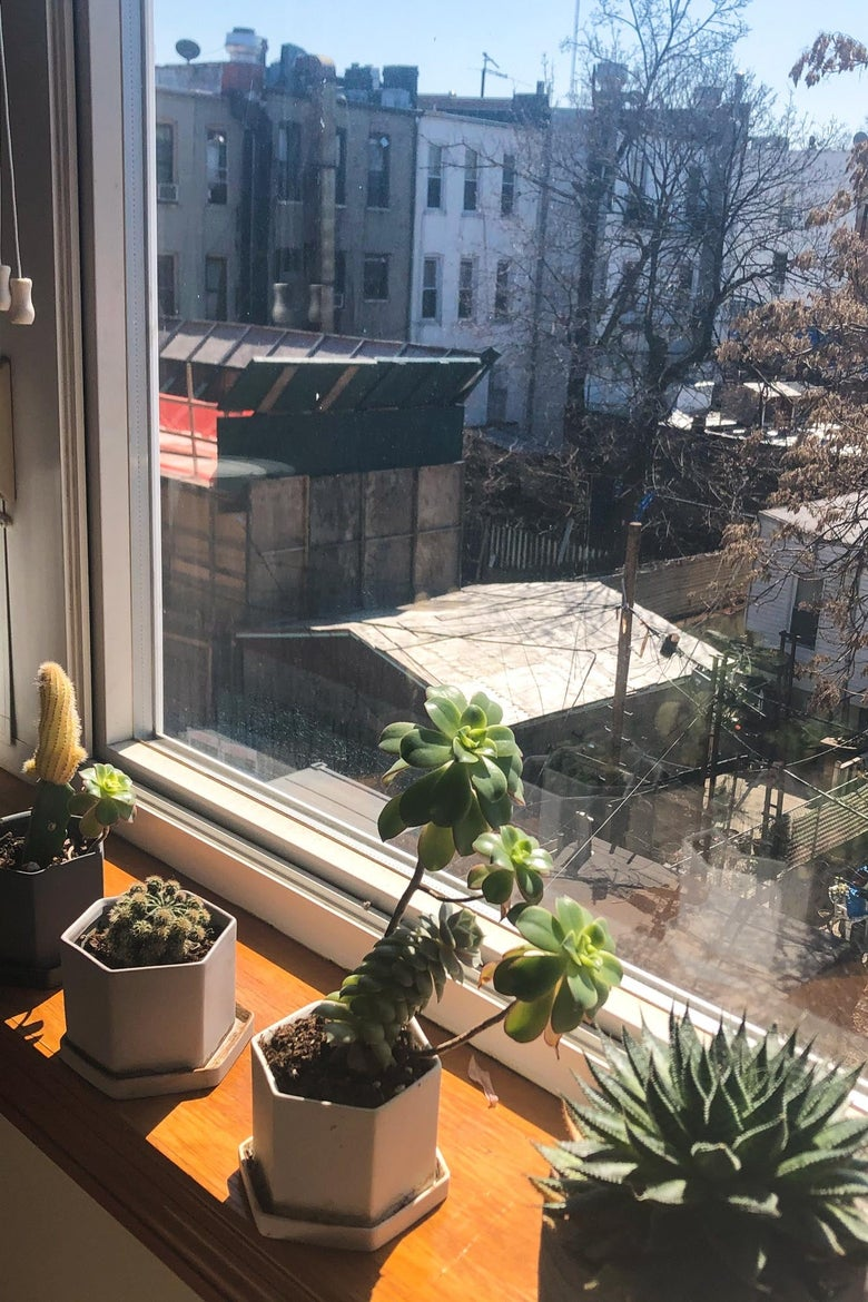 Succulent plants in a sunny window.