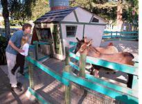 Llamas, in Tallulah's world