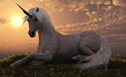 The Joy Of Unicorns The Real Reason You Never See The Mythical One