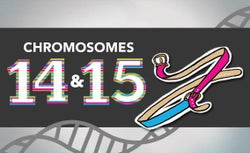 Blogging the human Genome Entry 10