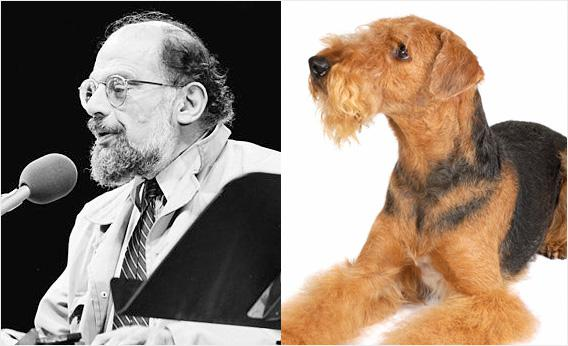 Allen Ginsberg and an airedale.