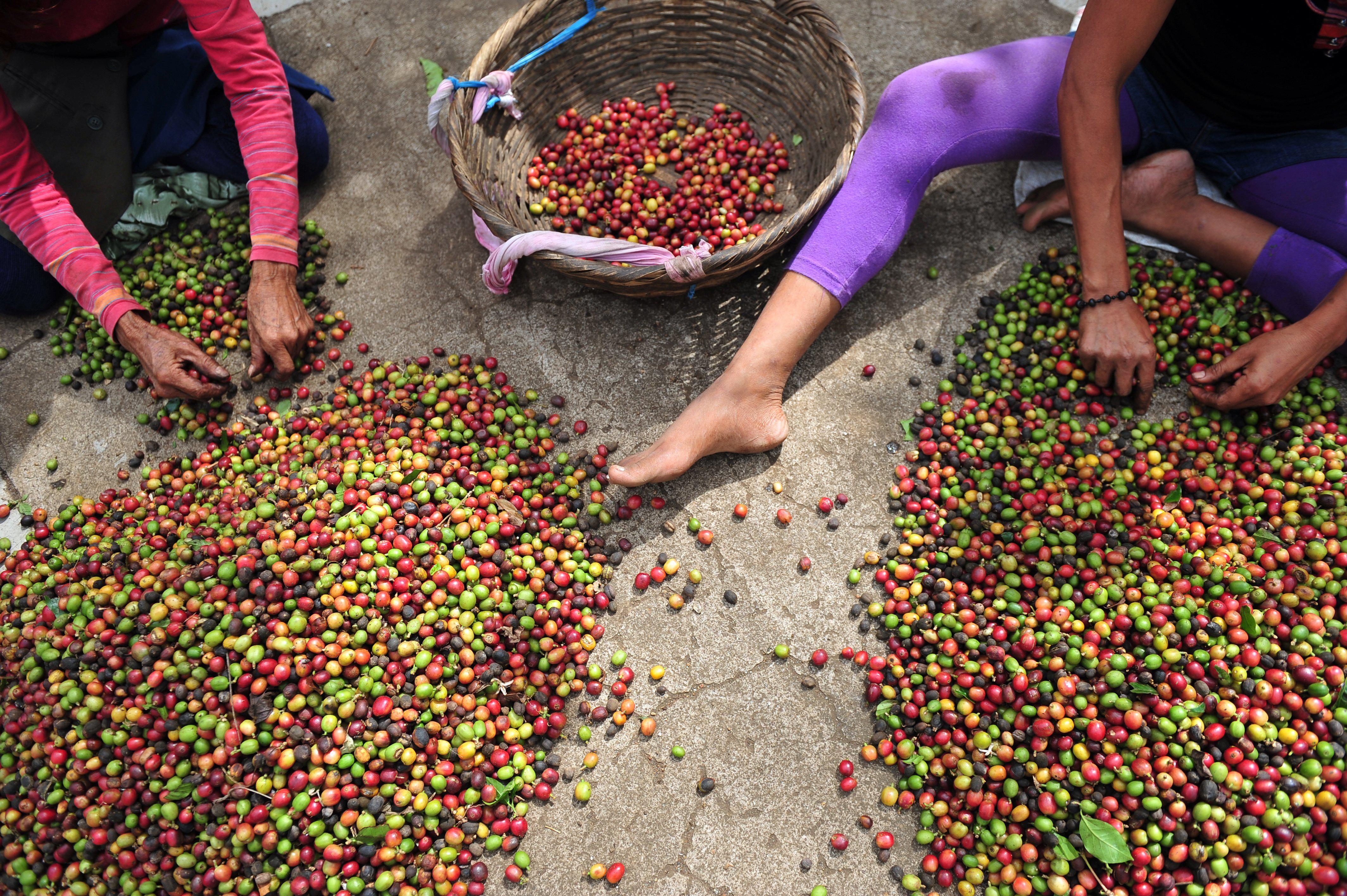 Toms gets into the coffee business: Americans love buying ethically sourced coffee.