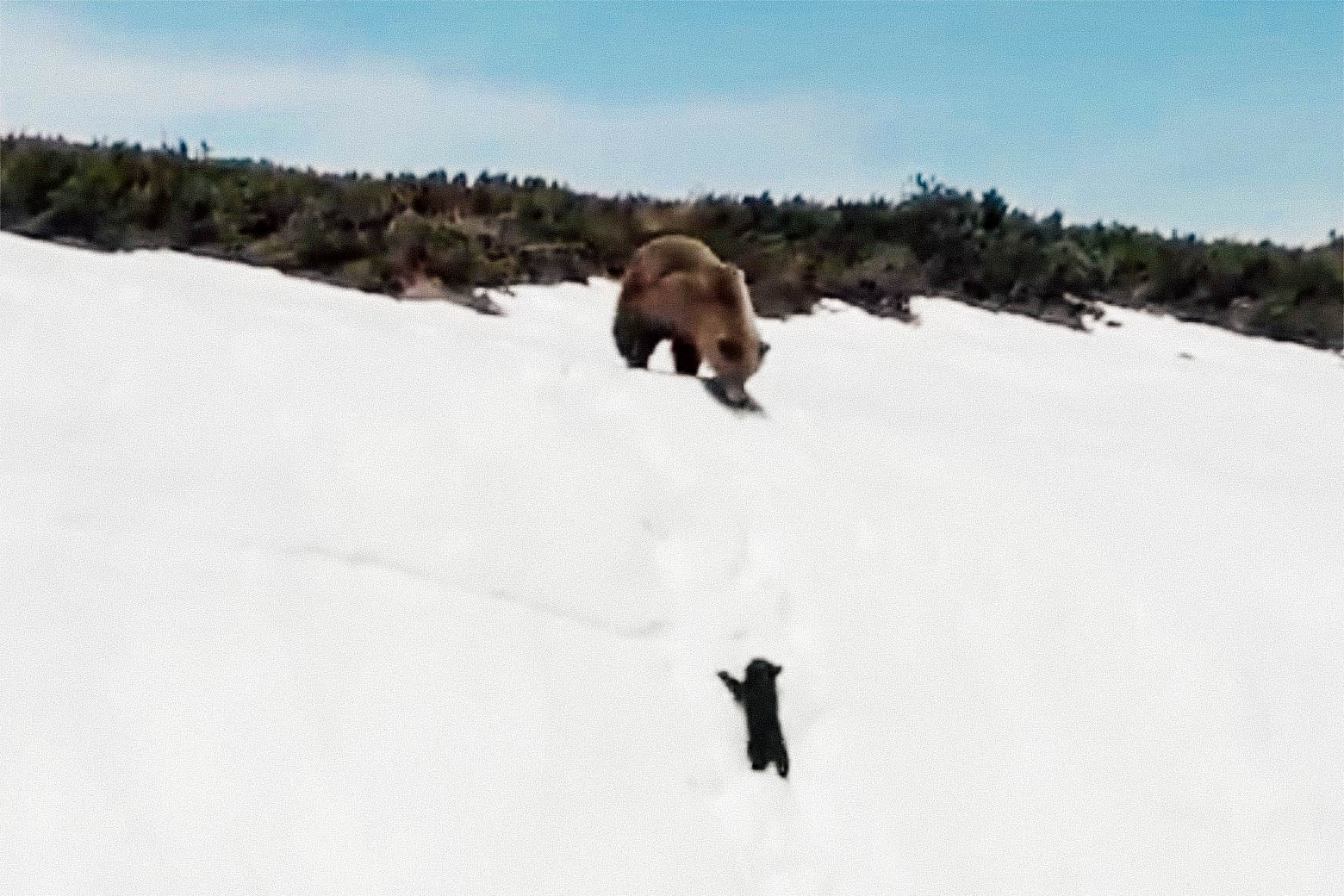 Screenshot from viral drone video of bears