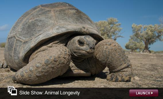 Slide Show: Animal Longevity. Click image to launch.