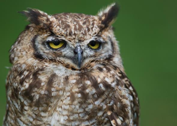 Where Do Birds Sleep Roosting In Nests Water Flocks Cavities