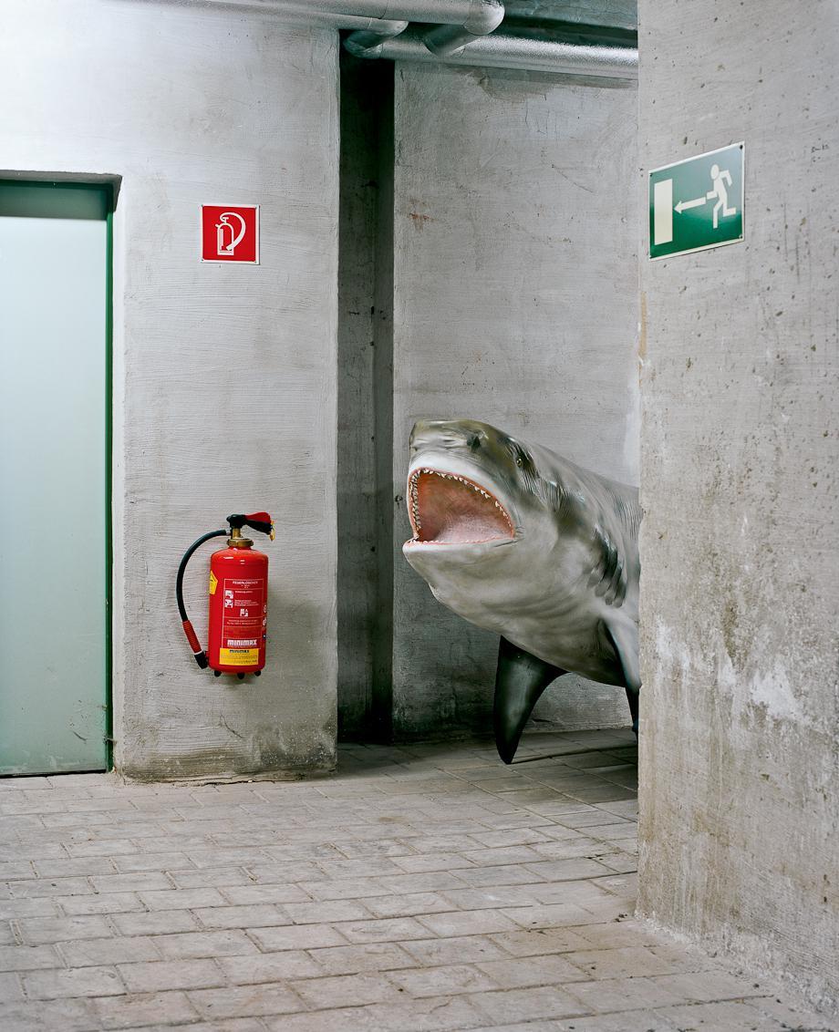Basement shark, 2011.