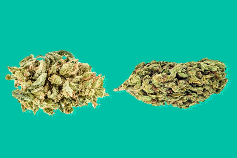 Two buds of weed.