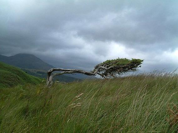 The strong winds found at high altitudes can bend and break trees.
