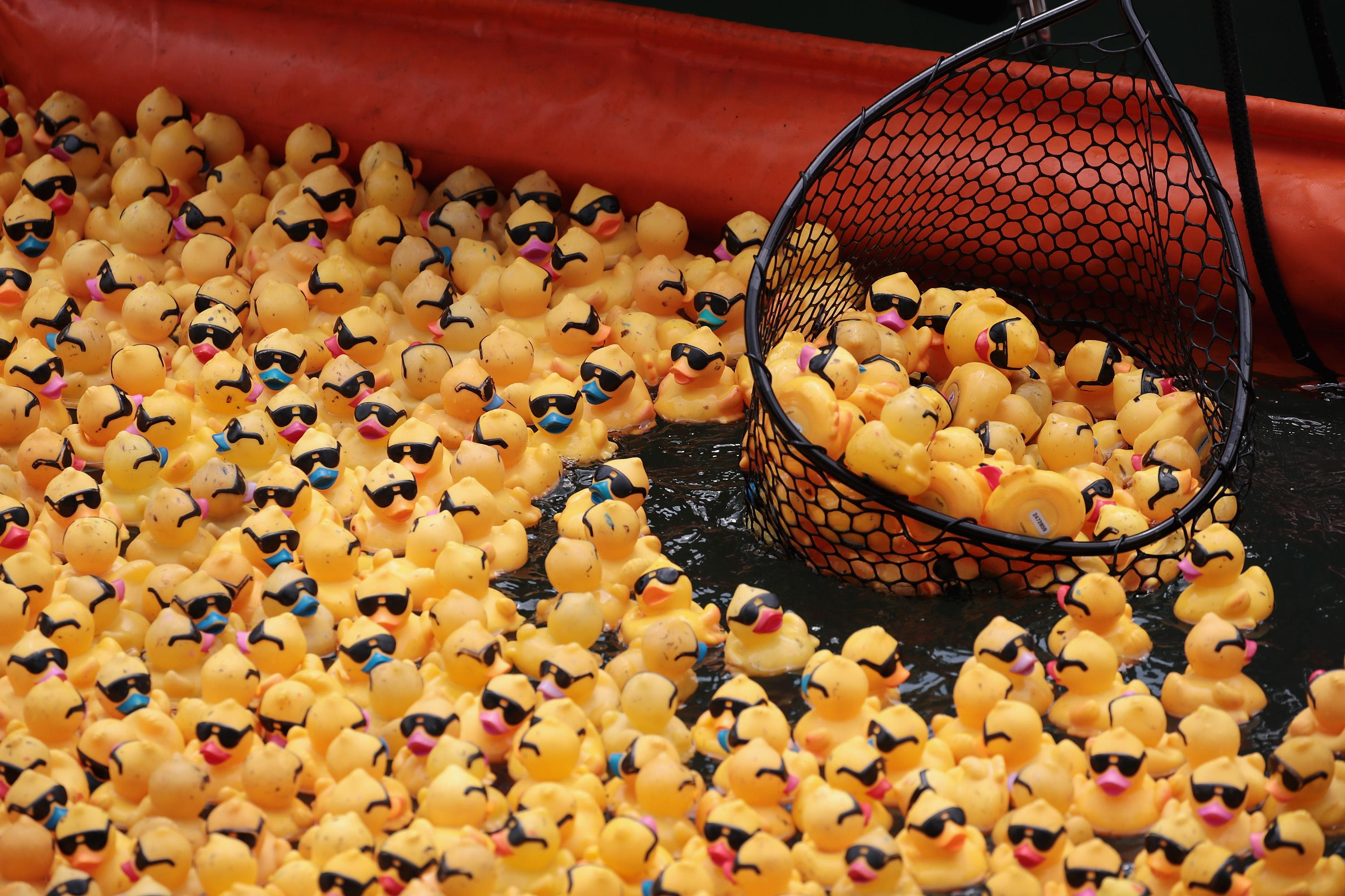 Dozens and dozens of yellow rubber ducks wearing sunglasses