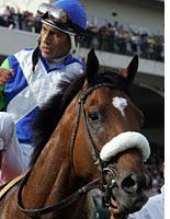Jockey Edgar Prado and Barbaro. Click image to expand.