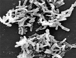 C. diff bacteria