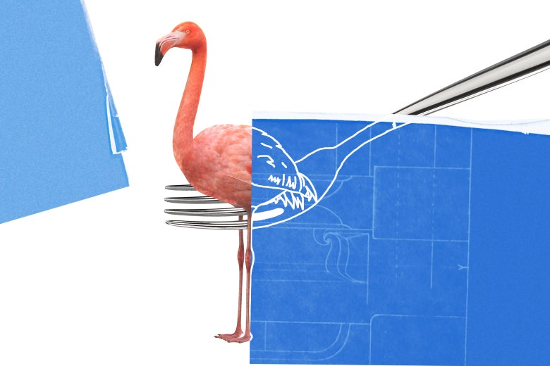 Can You Eat a Flamingo? And Why Do So Many People Apparently Want to Know?