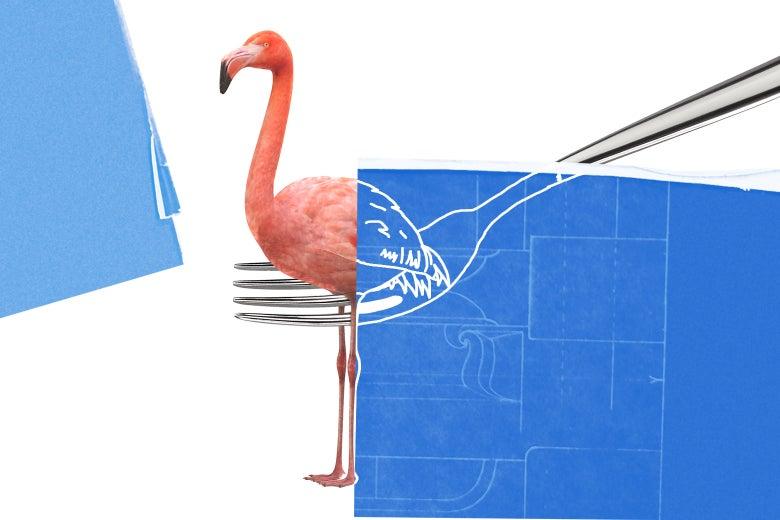 Can You Eat a Flamingo?