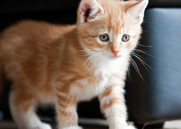 Distressingly cute kitten.