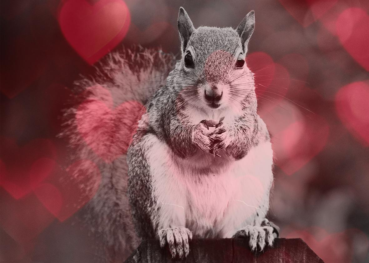 Squirrel love.