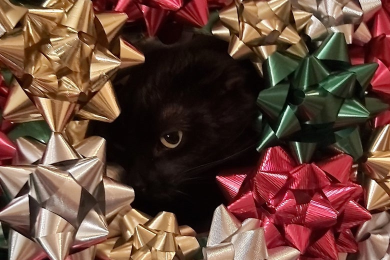 A black cat in a bow wreath!