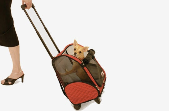 Small dog in the Snoozer Wheel Around 4-In-1 Pet Travel Carrier.