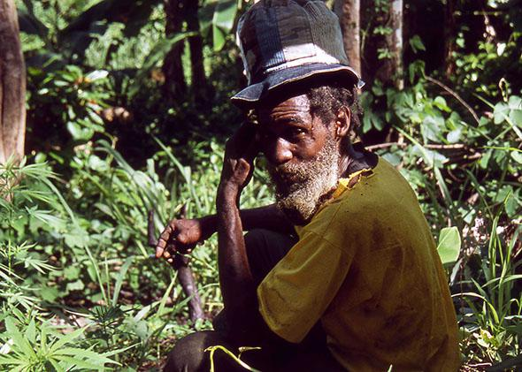 Rastafarian in a field of marijuana plants, Blue Mountains, Jamaica, June 2005.