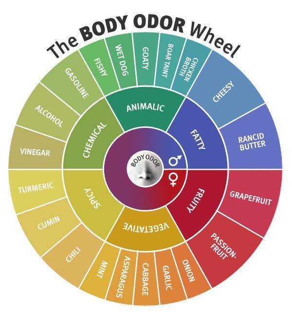 The B O  wheel