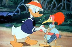 Kalle Anka and the Aracuan Bird